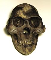skull lucy