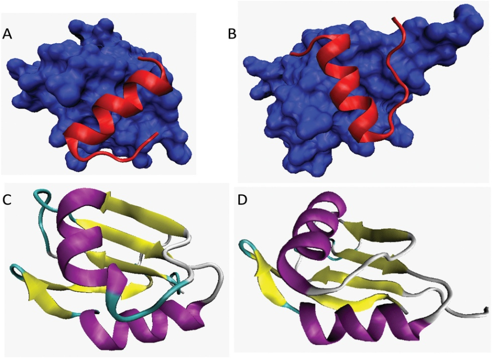 protein structure 4-2016