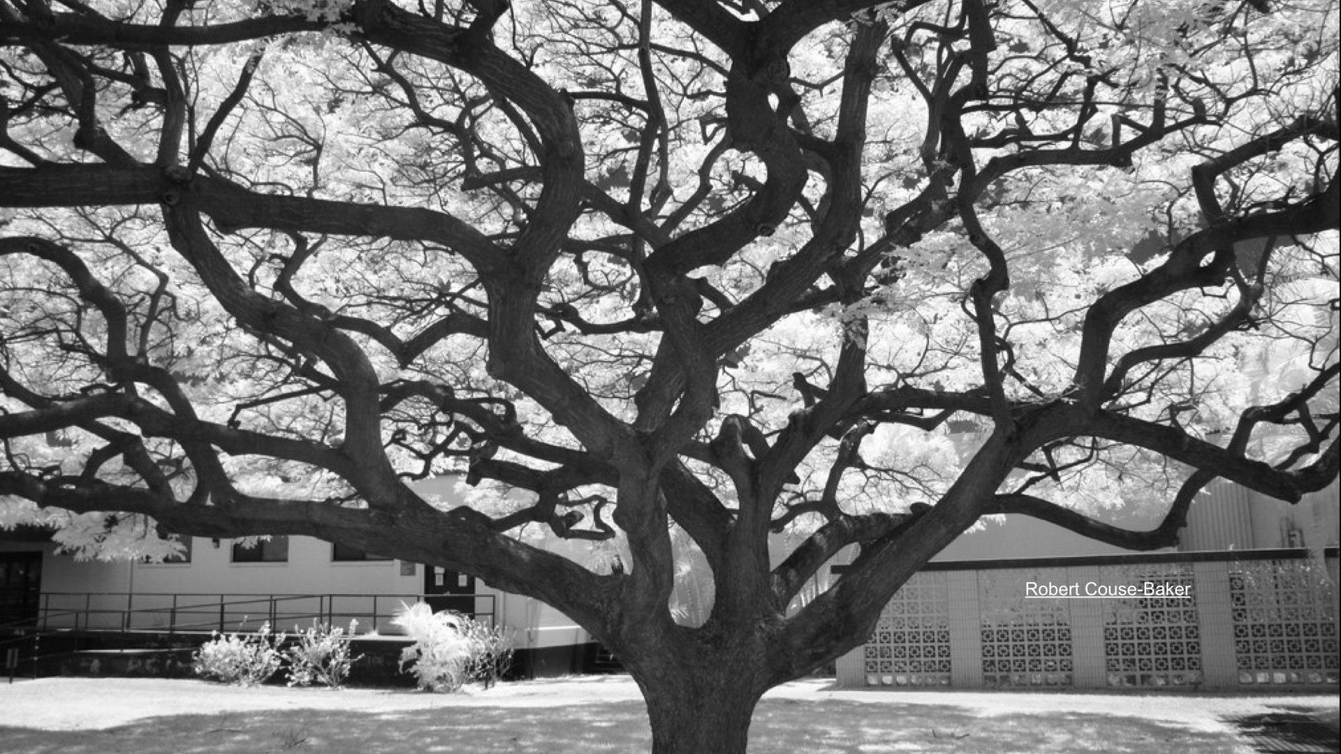 trees.001