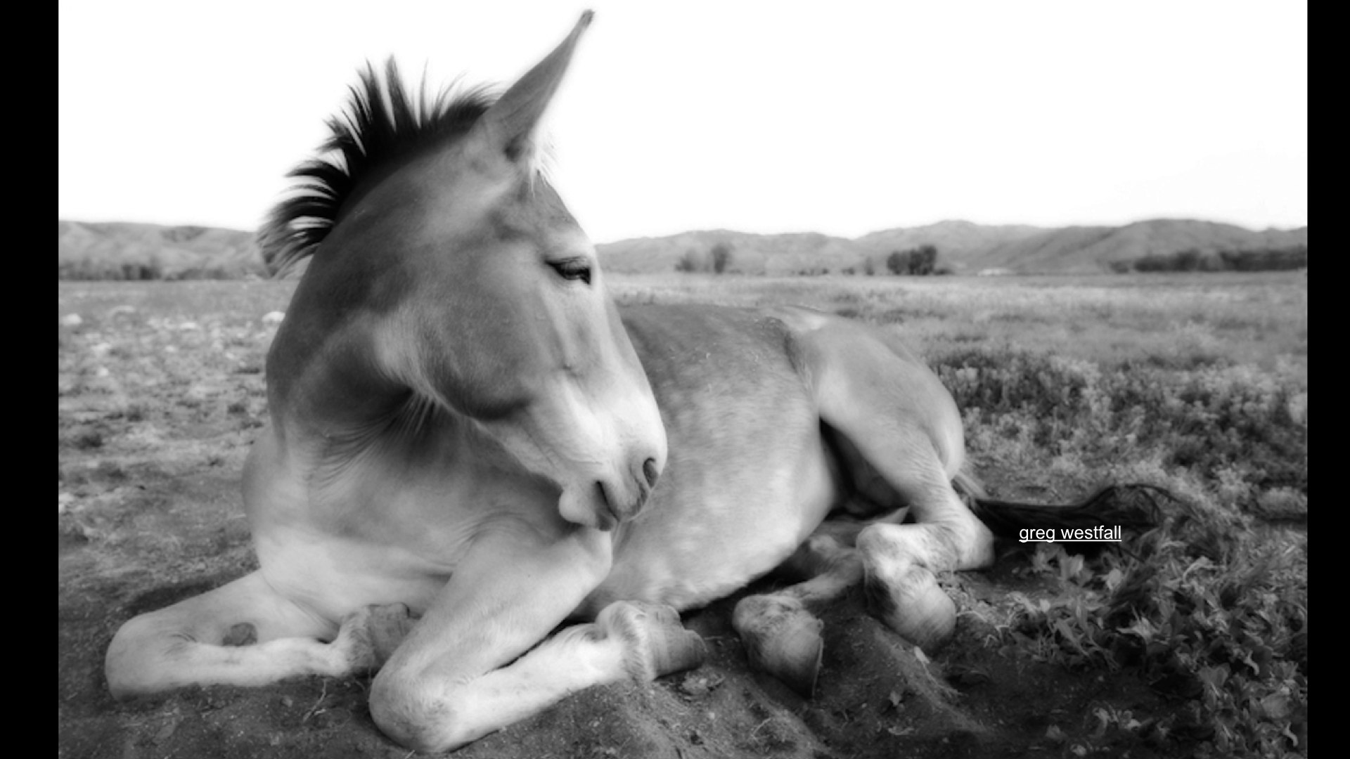 mule.001