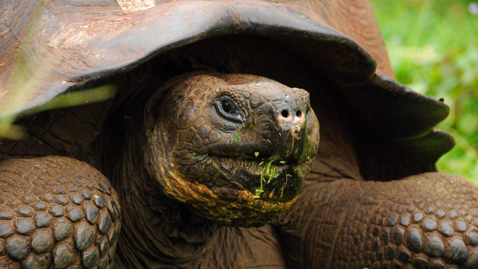 tortoise.001